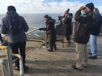 In January, we caught the tail end of whale migration south. The stragglers.